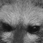 Löffelhund Bucky